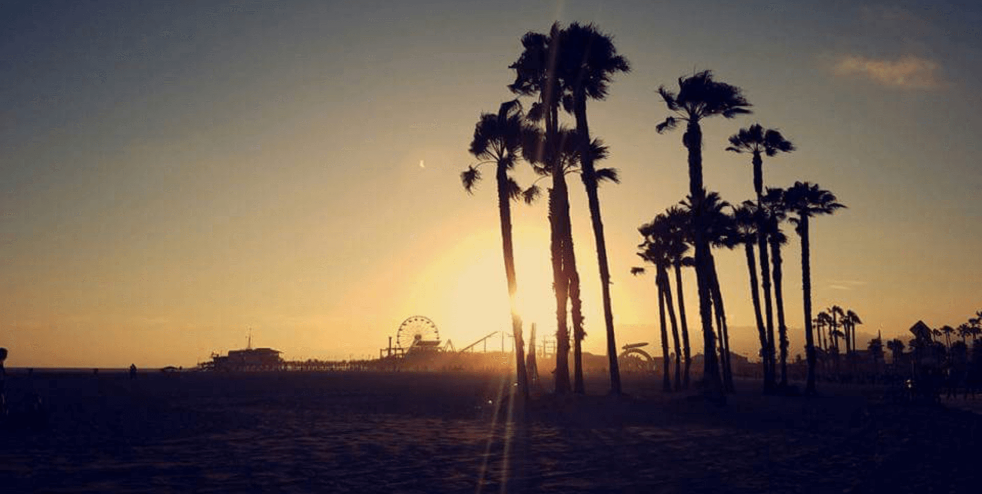 ferris wheel and palm trees on the beach at sunset